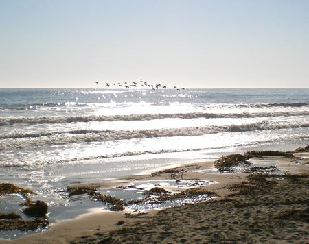 beachbirds